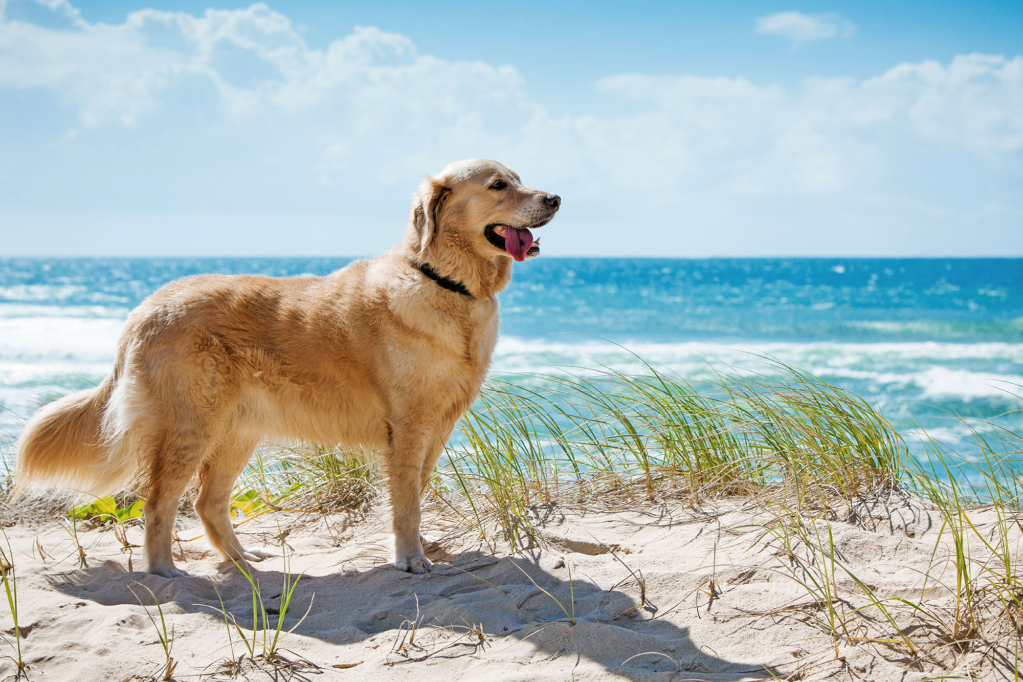 Tui ferien mit hund hundefreundliche hotels for Hotel auf juist mit hund